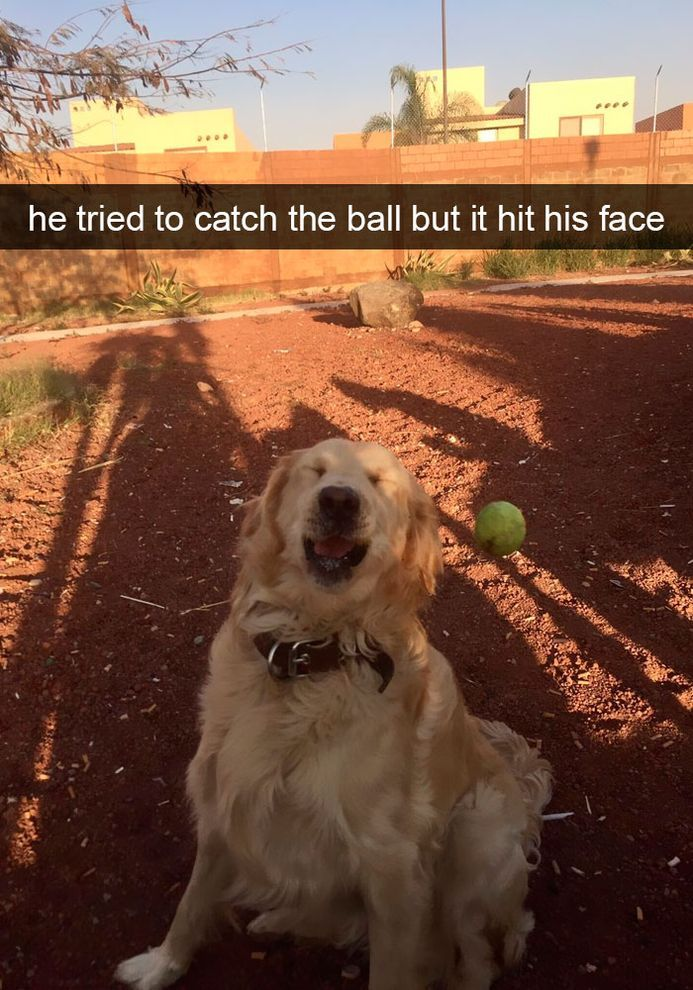funny-dog-snapchats-that-you-need-to-see-right-now-31