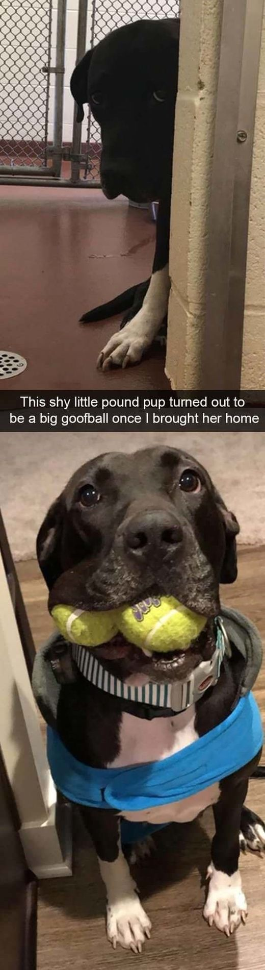 funny-dog-snapchats-that-you-need-to-see-right-now-32