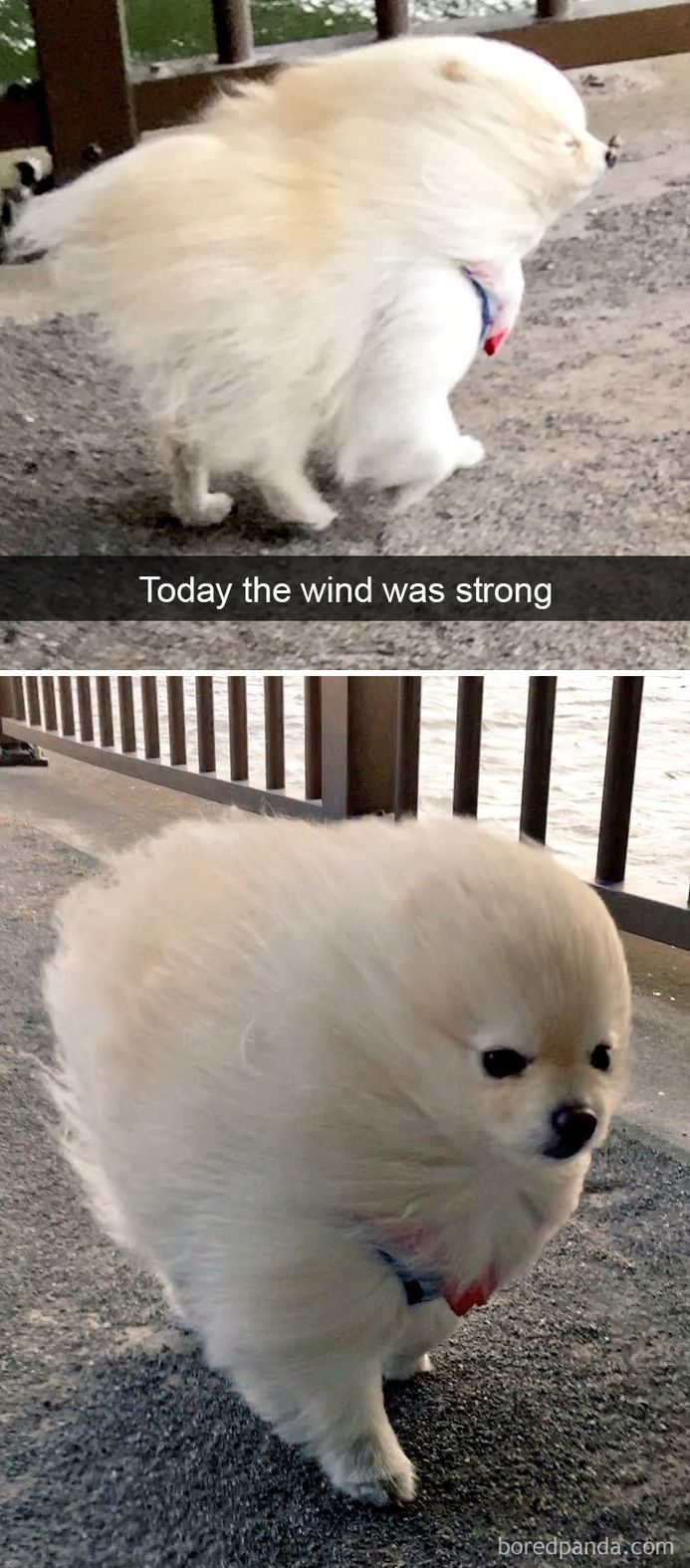 funny-dog-snapchats-that-you-need-to-see-right-now-33