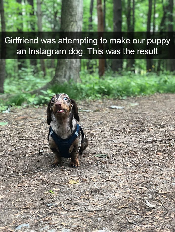 funny-dog-snapchats-that-you-need-to-see-right-now-37
