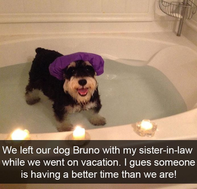 funny-dog-snapchats-that-you-need-to-see-right-now-4