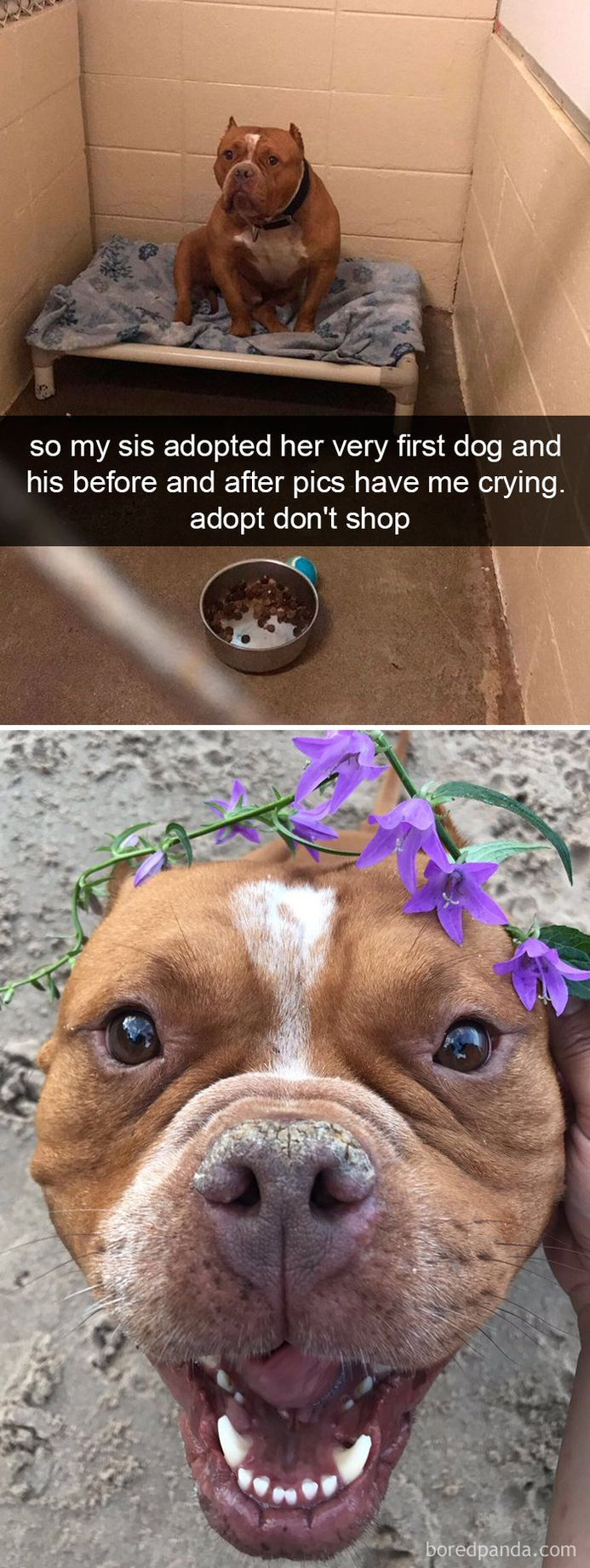 funny-dog-snapchats-that-you-need-to-see-right-now-40