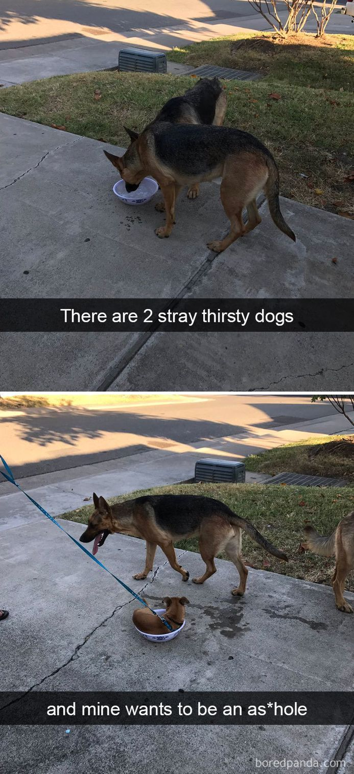 funny-dog-snapchats-that-you-need-to-see-right-now-41