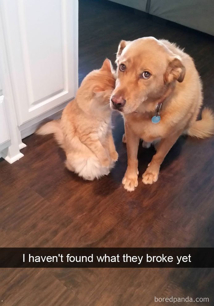 funny-dog-snapchats-that-you-need-to-see-right-now-7