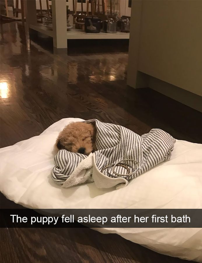 funny-dog-snapchats-that-you-need-to-see-right-now-8