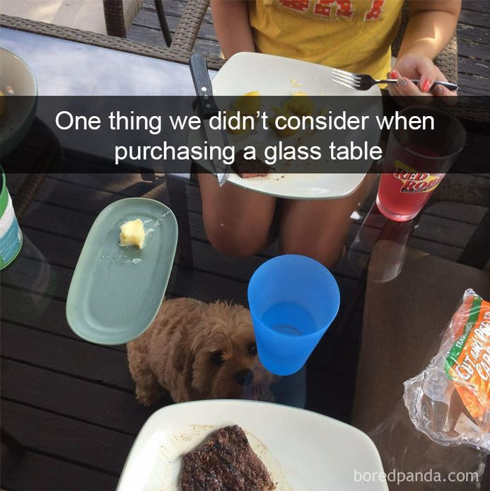 funny-dog-snapchats-that-you-need-to-see-right-now-9
