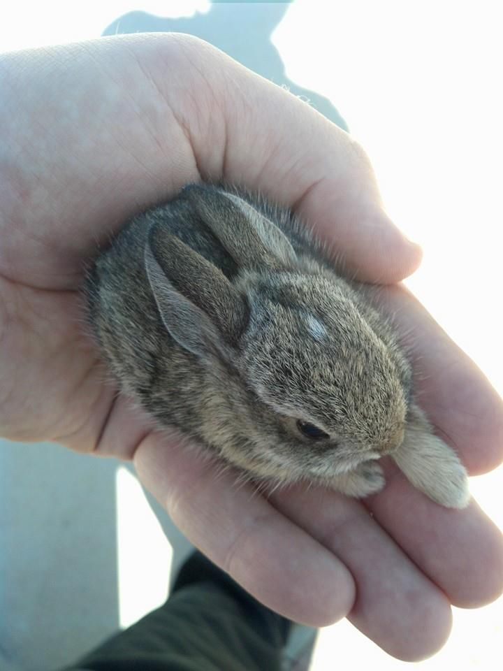 super-cute-tiny-bunnies-that-will-melt-your-heart-11