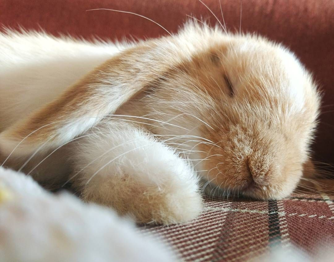 super-cute-tiny-bunnies-that-will-melt-your-heart-16