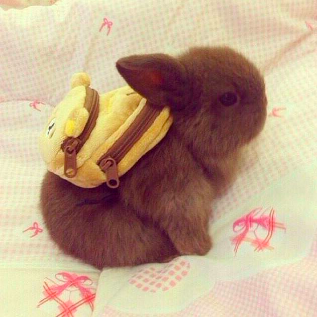super-cute-tiny-bunnies-that-will-melt-your-heart-21