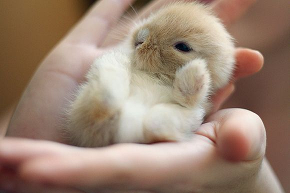 super-cute-tiny-bunnies-that-will-melt-your-heart-3
