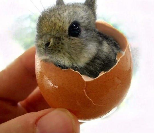 super-cute-tiny-bunnies-that-will-melt-your-heart-5