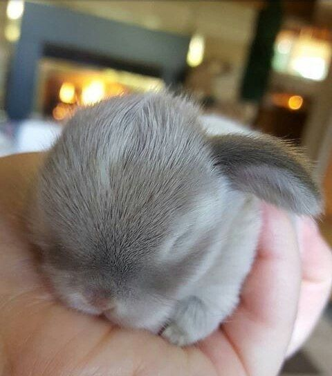 super-cute-tiny-bunnies-that-will-melt-your-heart-6