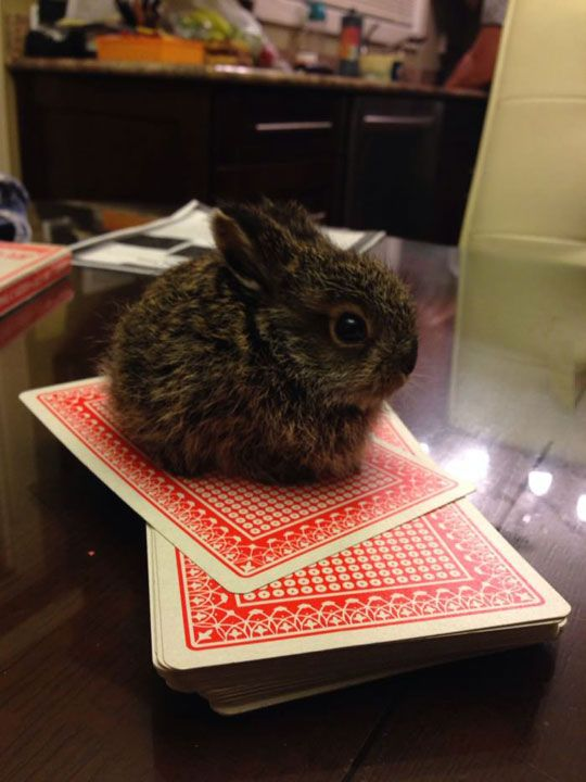 super-cute-tiny-bunnies-that-will-melt-your-heart-8