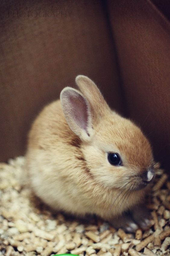 super-cute-tiny-bunnies-that-will-melt-your-heart-9