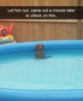 funny-animal-snapchats-to-help-you-laugh-away-the-day-1
