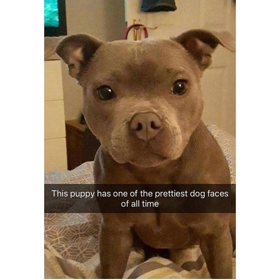 funny-animal-snapchats-to-help-you-laugh-away-the-day-13