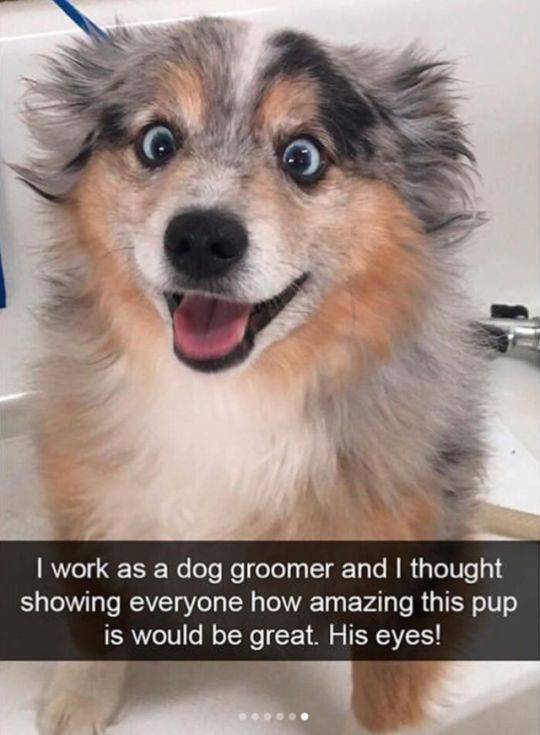 funny-animal-snapchats-to-help-you-laugh-away-the-day-14