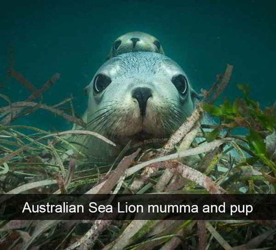 funny-animal-snapchats-to-help-you-laugh-away-the-day-15