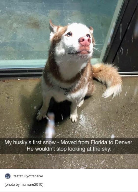 funny-animal-snapchats-to-help-you-laugh-away-the-day-16