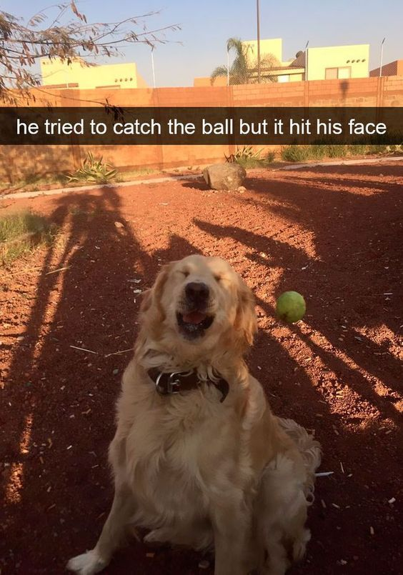 funny-animal-snapchats-to-help-you-laugh-away-the-day-26