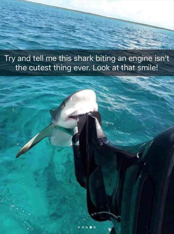 funny-animal-snapchats-to-help-you-laugh-away-the-day-4
