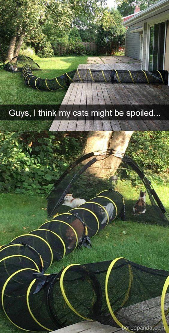 funny-animal-snapchats-to-help-you-laugh-away-the-day-7
