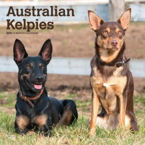 australian-kelpie-dog-breed-information-3