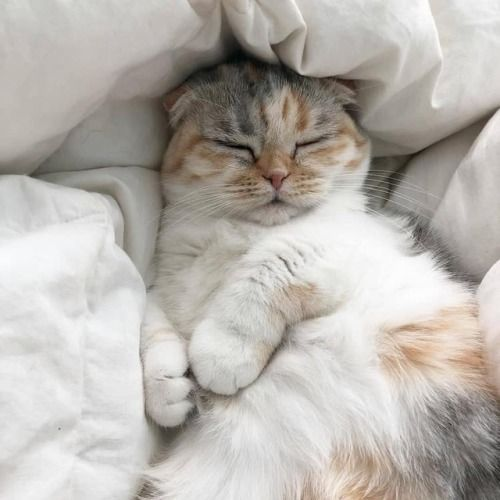 100 Photos Proving That Cats Are The Cutest Animal on Earth