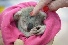 Adorable Baby Animals Will Surely Make Your Day Brighter