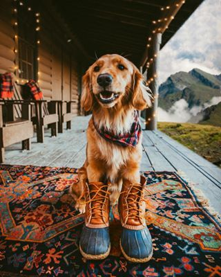 Dog Photos From This Week That'll Fill You With Good Energy