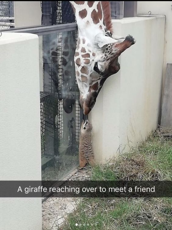 Funniest Animal Snapchats of All Time