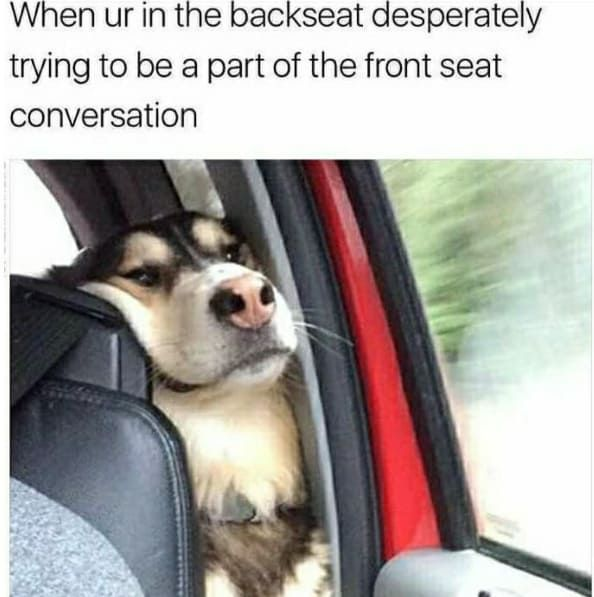 Hilarious and Funniest Dog Memes Of The Day (50 Pics)