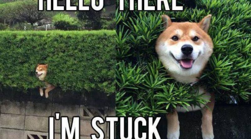dog-memes-with-captions-that-will-make-you-lol-28