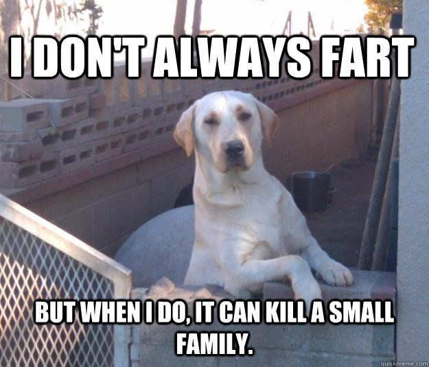 Dog Memes With Captions That Will Make You LOL