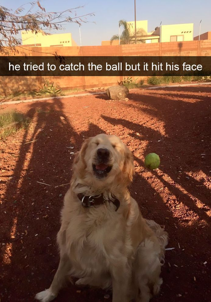 50+ Funniest Dog Memes That Will Keep You Laughing For Hours