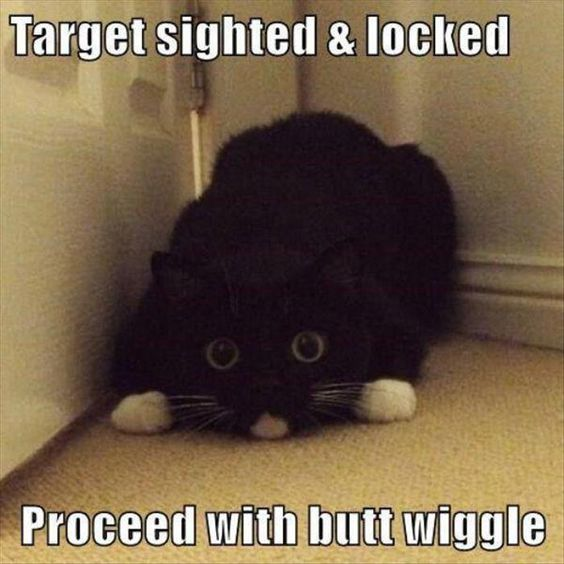 Cat Memes that will Make Your Day