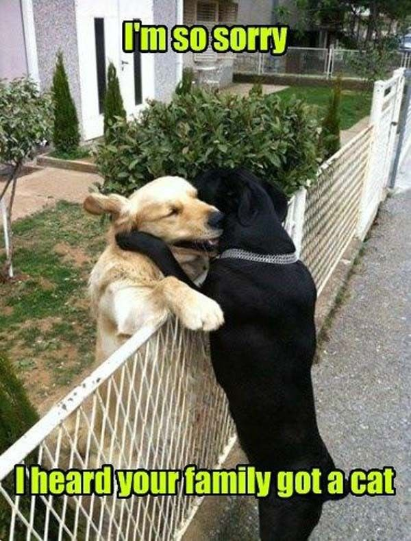 Humorous Dog Pics and Memes That Will Make You Laugh Hard