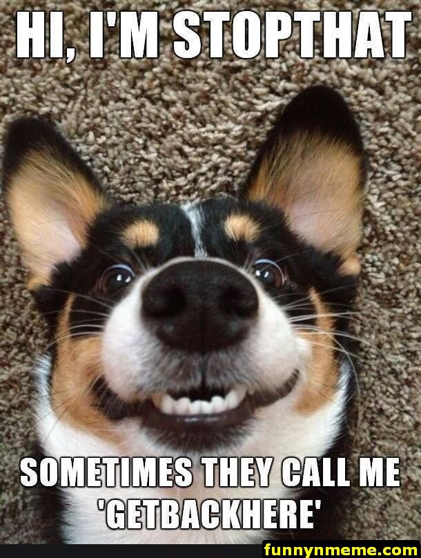Humorous Dog Pics and Memes That Will Make You Laugh Hard
