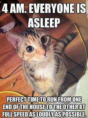 New Hot Funniest Cat Memes to Welcome 2020