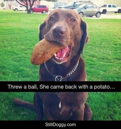 New Hot Funniest Dog Memes to Welcome 2020
