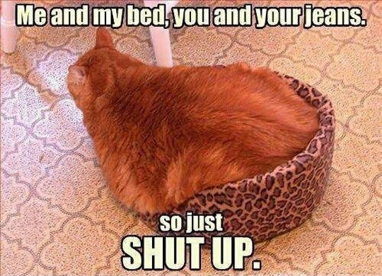 Pictures of the Day - Top 50 Funny Internet Cat Memes