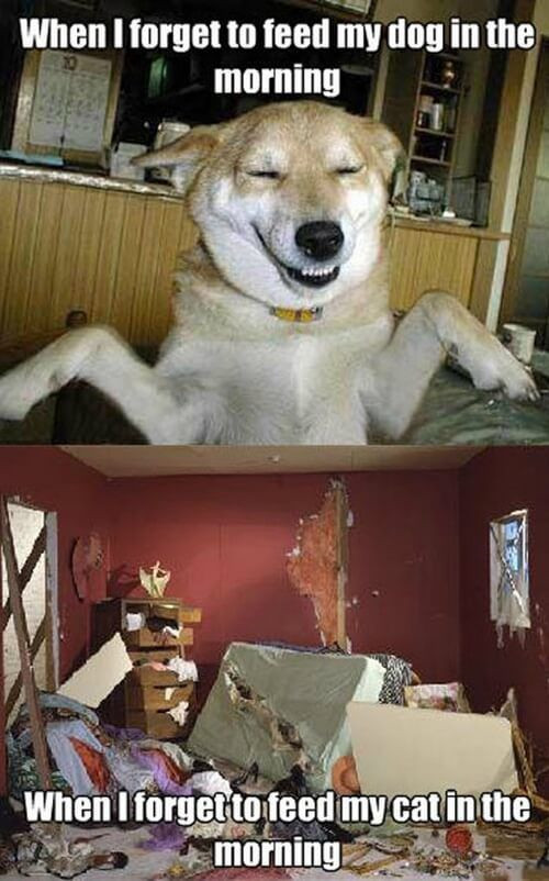 Pictures of the Day - Top 50 Funny Internet Dog Memes