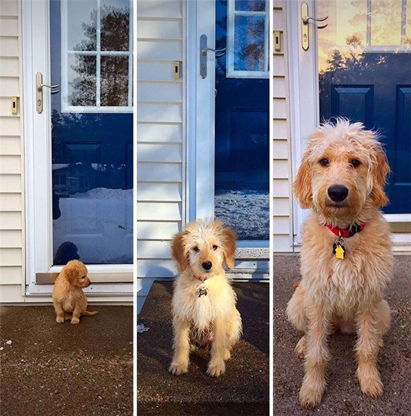 Before and After Pictures of Dogs Growing up