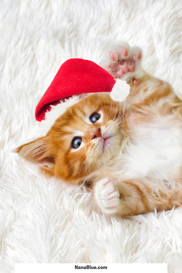 Cutest Christmas Cats EVER