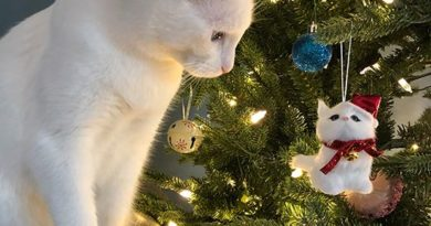35 Cutest Christmas Cats EVER!