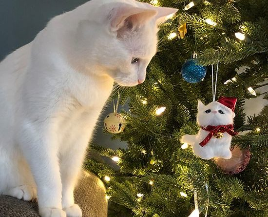 cutest-christmas-cats-ever-1521573200593599282