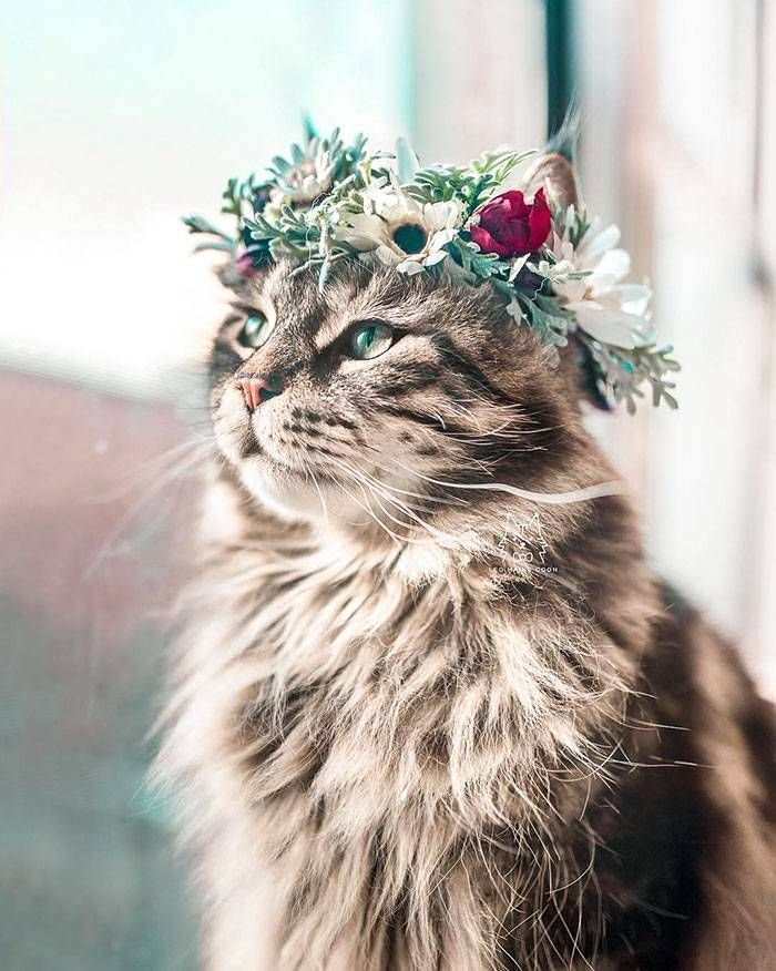 PURRFECT CAT PHOTOS TO BRIGHTEN YOUR DAY