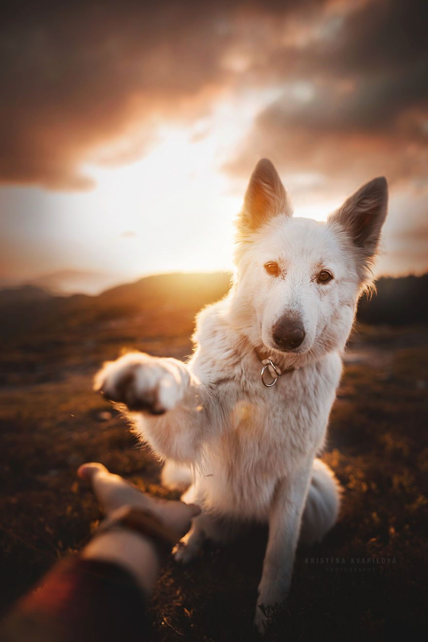 PURRFECT DOG PHOTOS TO BRIGHTEN YOUR DAY