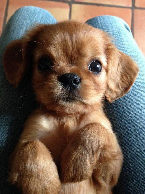Tiny Puppies Are The Most Adorable Dogs Ever