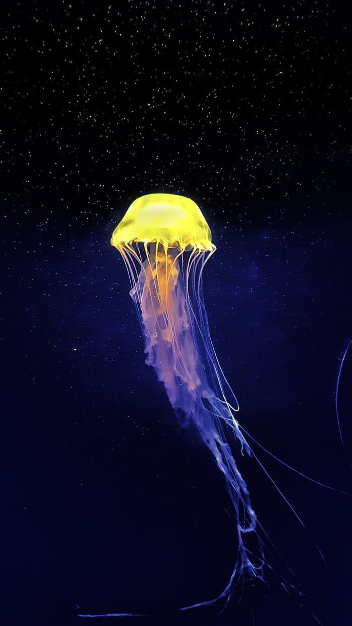 Colorful Jellyfish That Will Make Your Jaw Drop